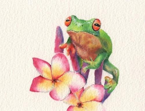 Franjipani Froggie